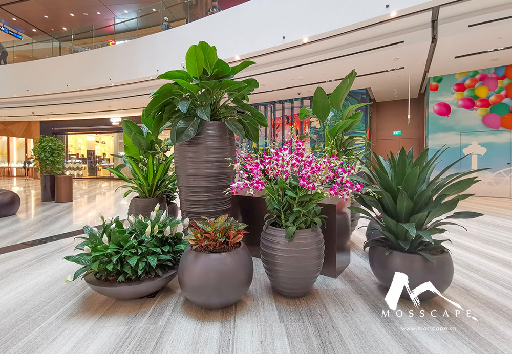 Fiberclay planters in Jewel Changi