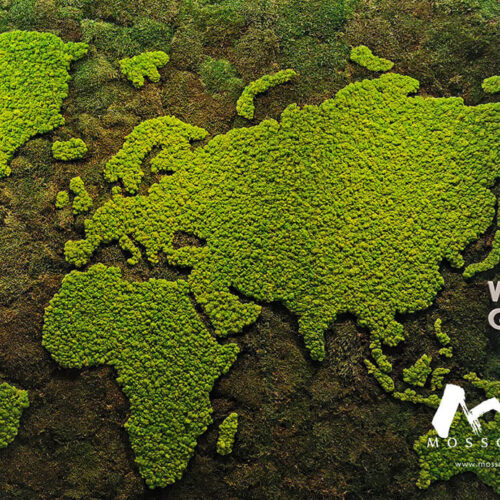 Preserved moss art in HDI Office