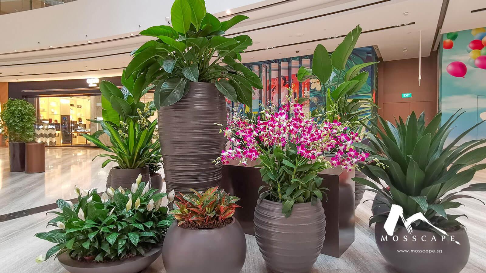 Preserved indoor flower decor in Singapore
